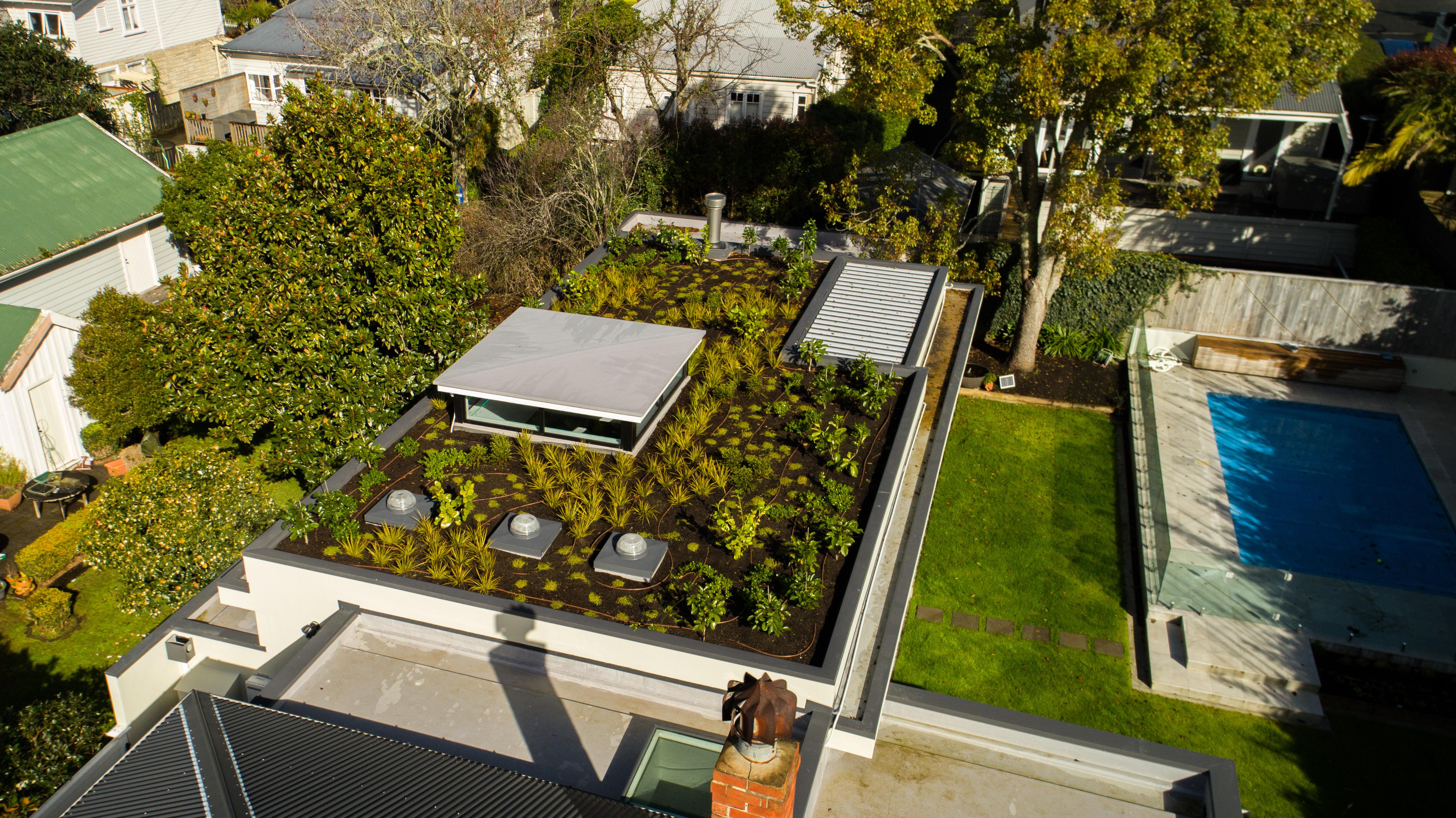 View of green roof in Mount Eden