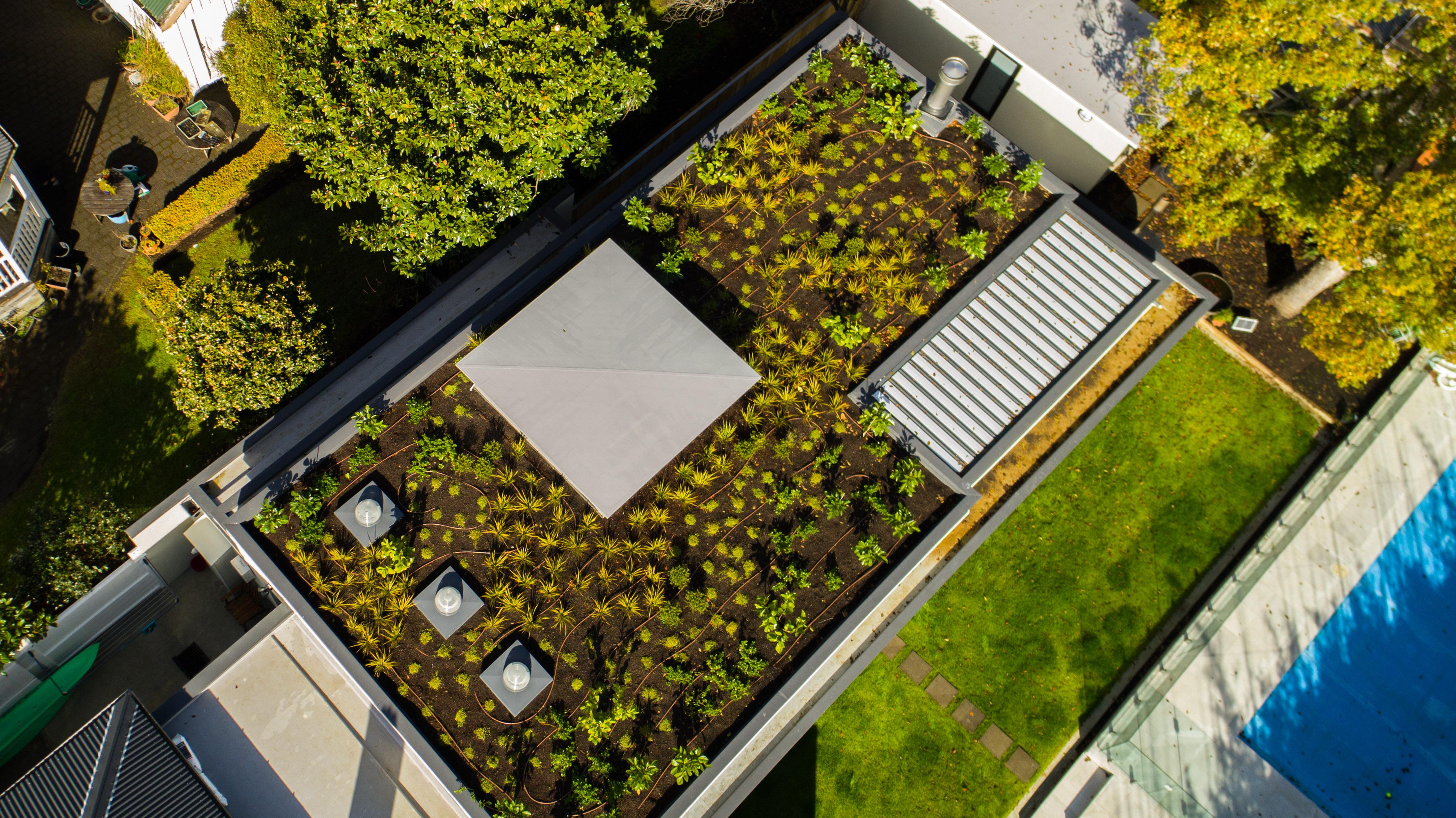 Green roof design in Mount Eden