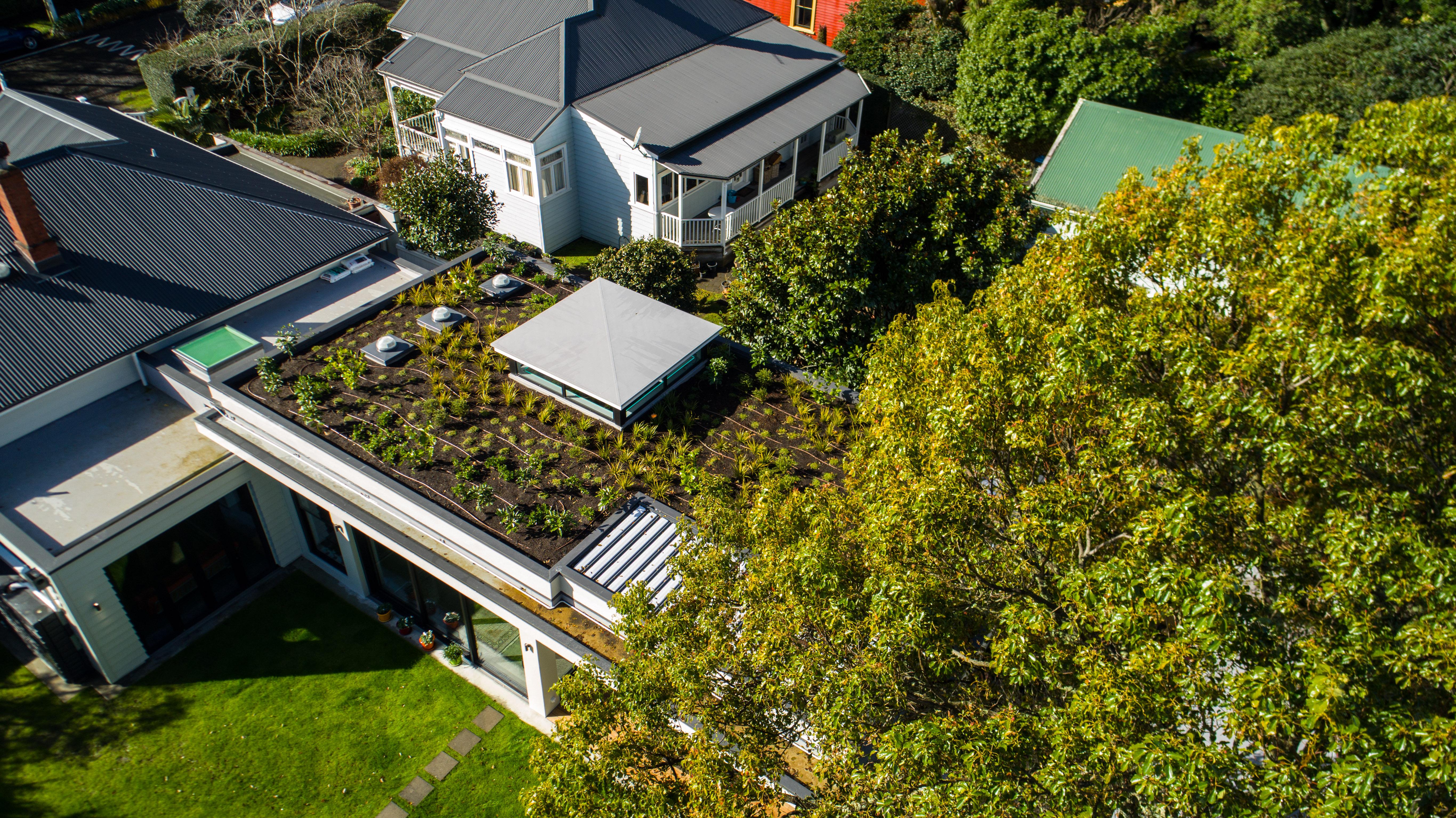 Green roof in Mount Eden