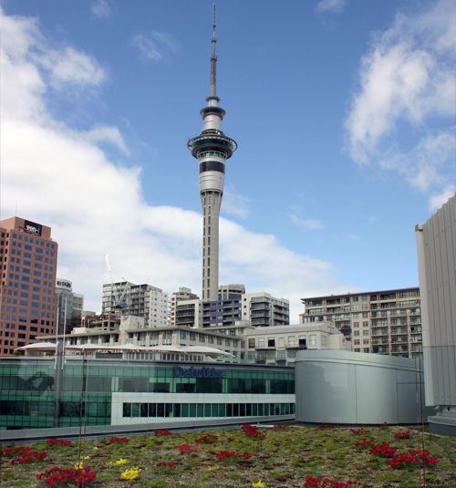 Green roof in Auckland city