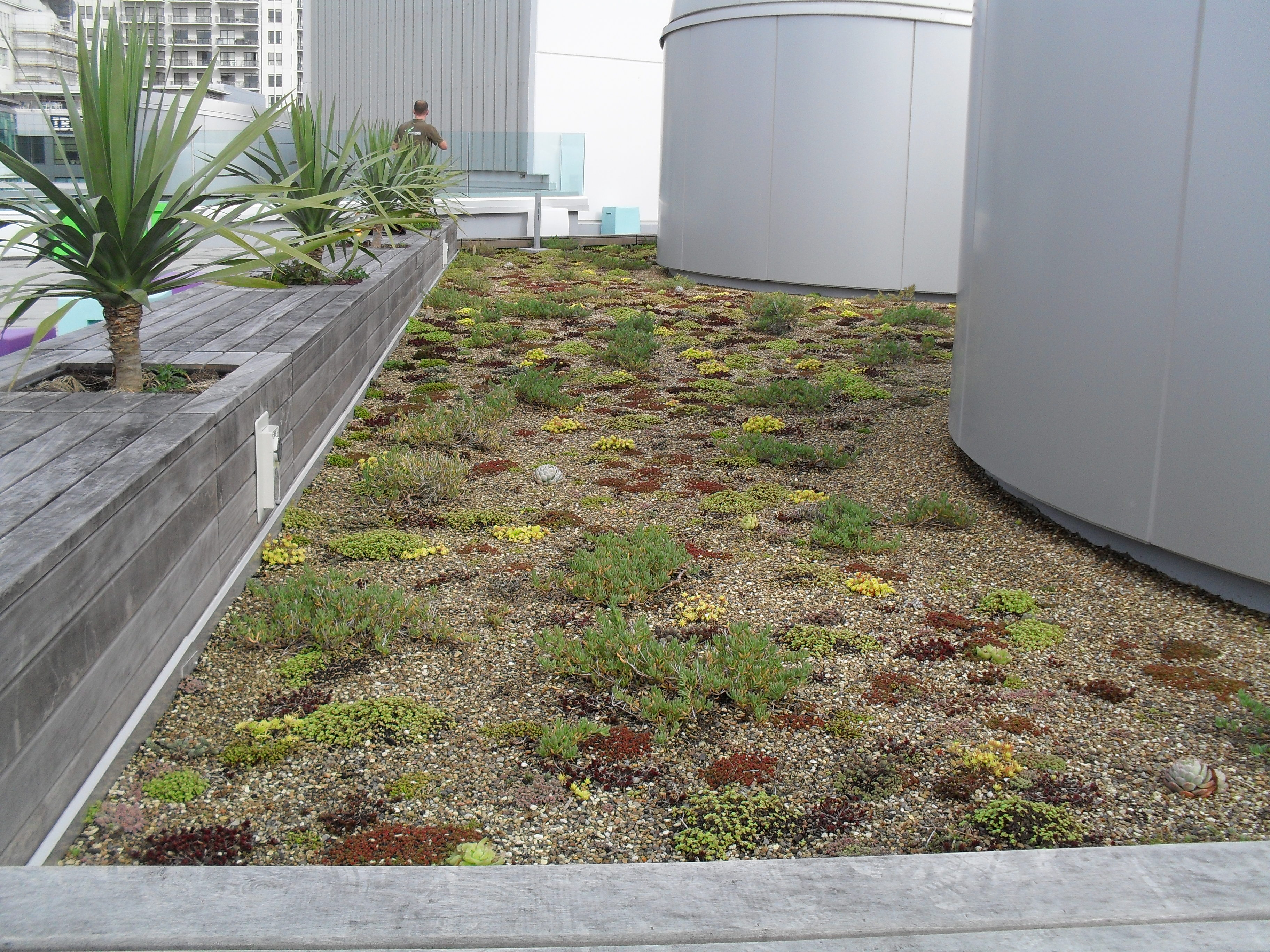 Green Roof in Auckland CBD
