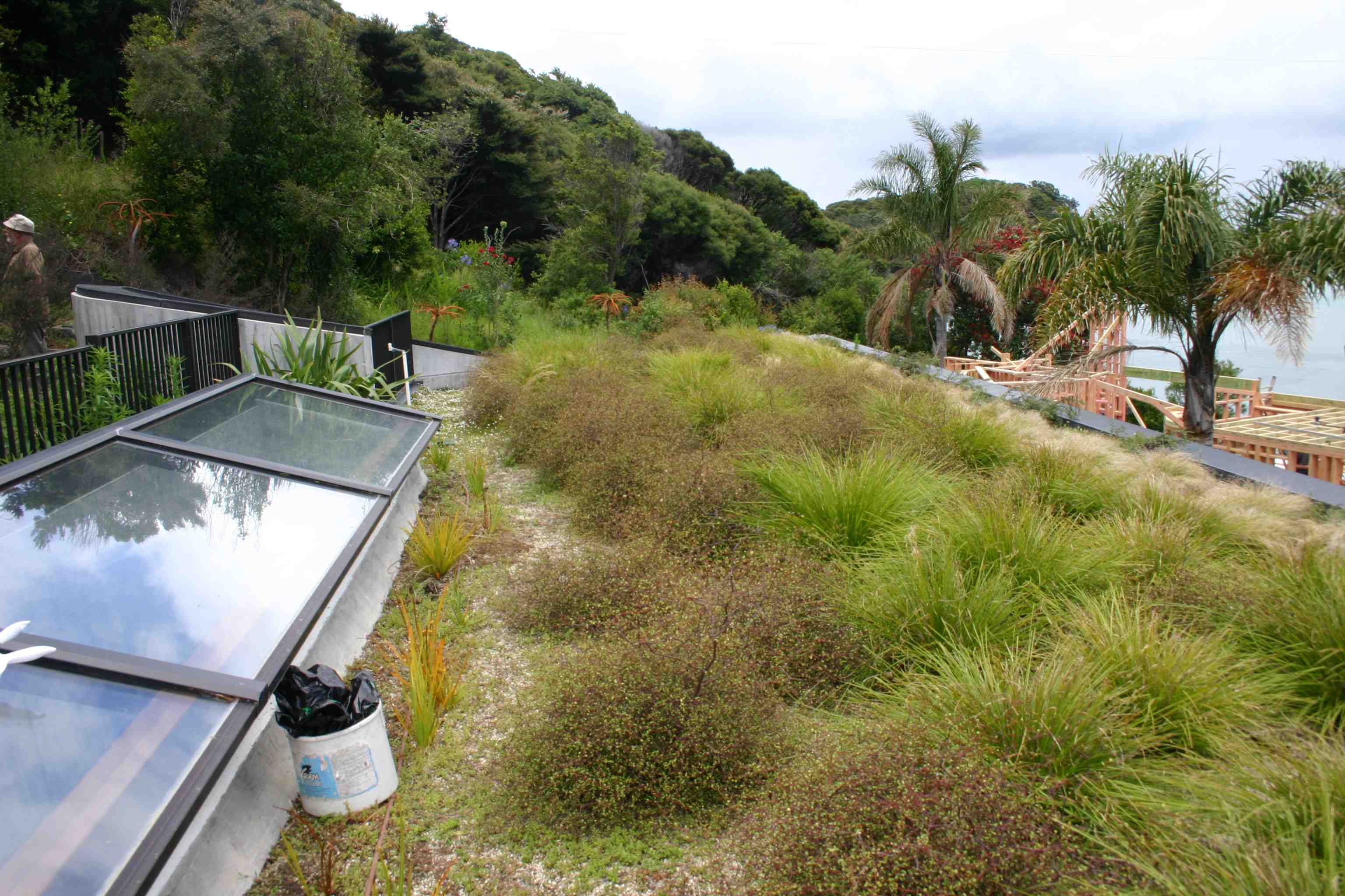 finished green roof at the Bay of Islands Bach