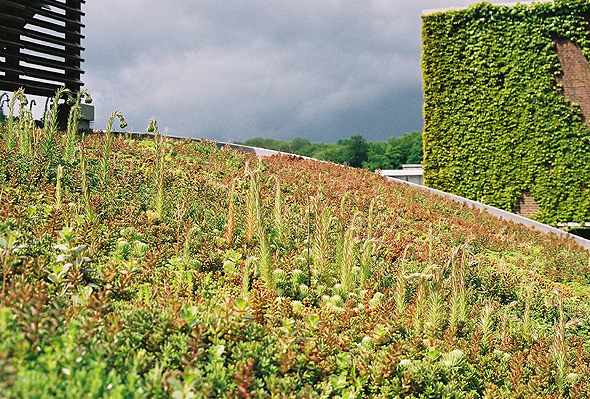 Green roof Cardiff