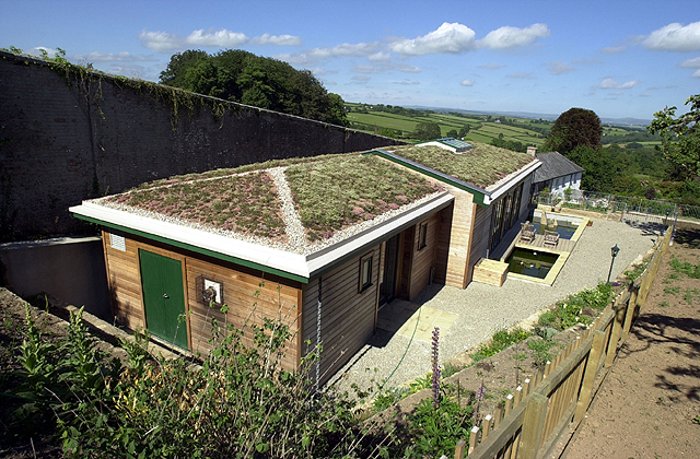 Green roof Cornwall - plug planting - 1 year after installation