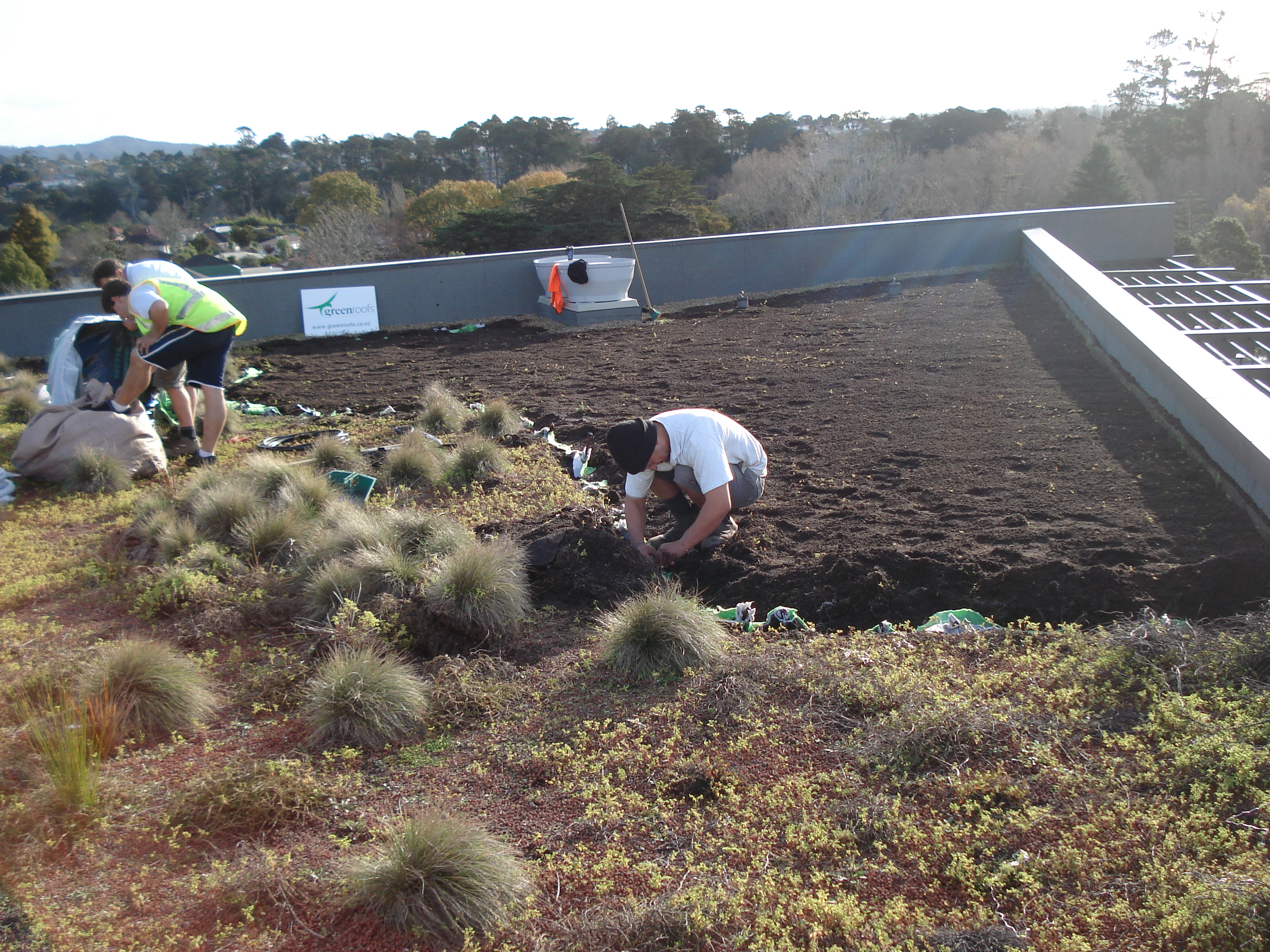 planting the green roof at the University
