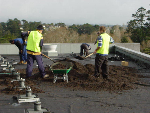 preparing the green roof