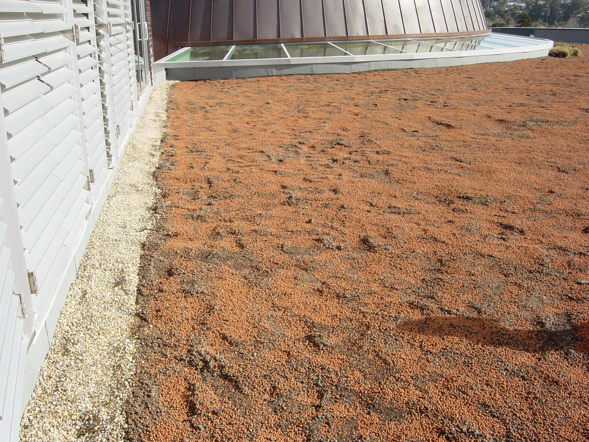 Preparing University green roof