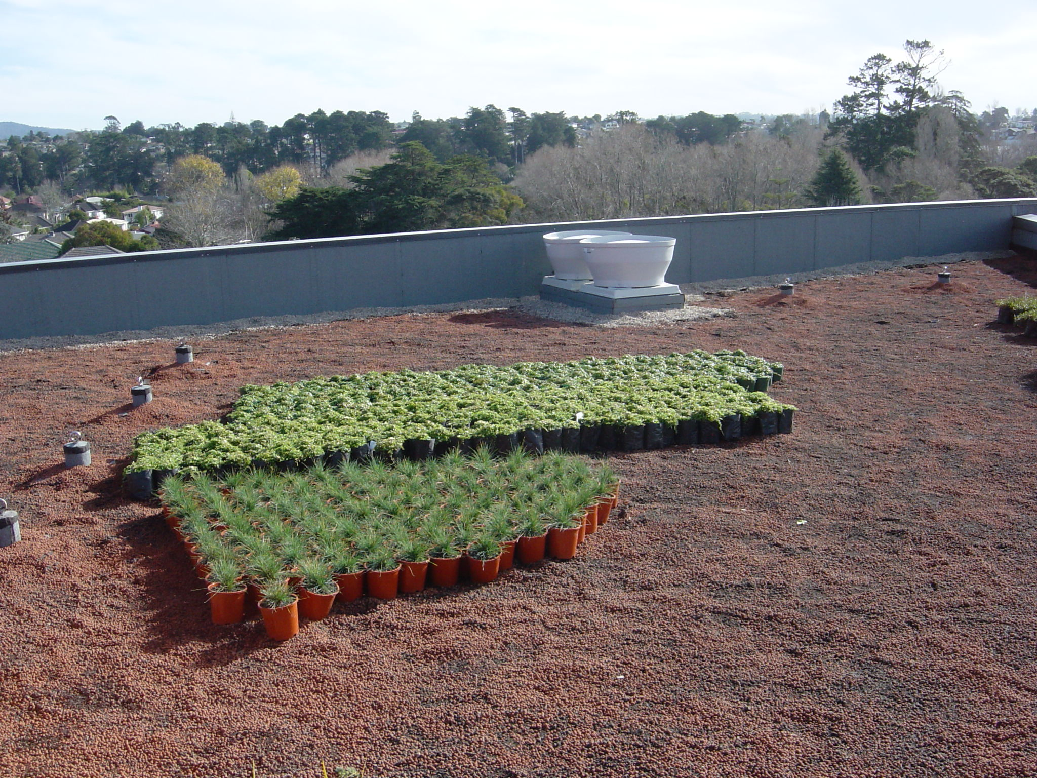 Plants at the University ready to be planted on the roof