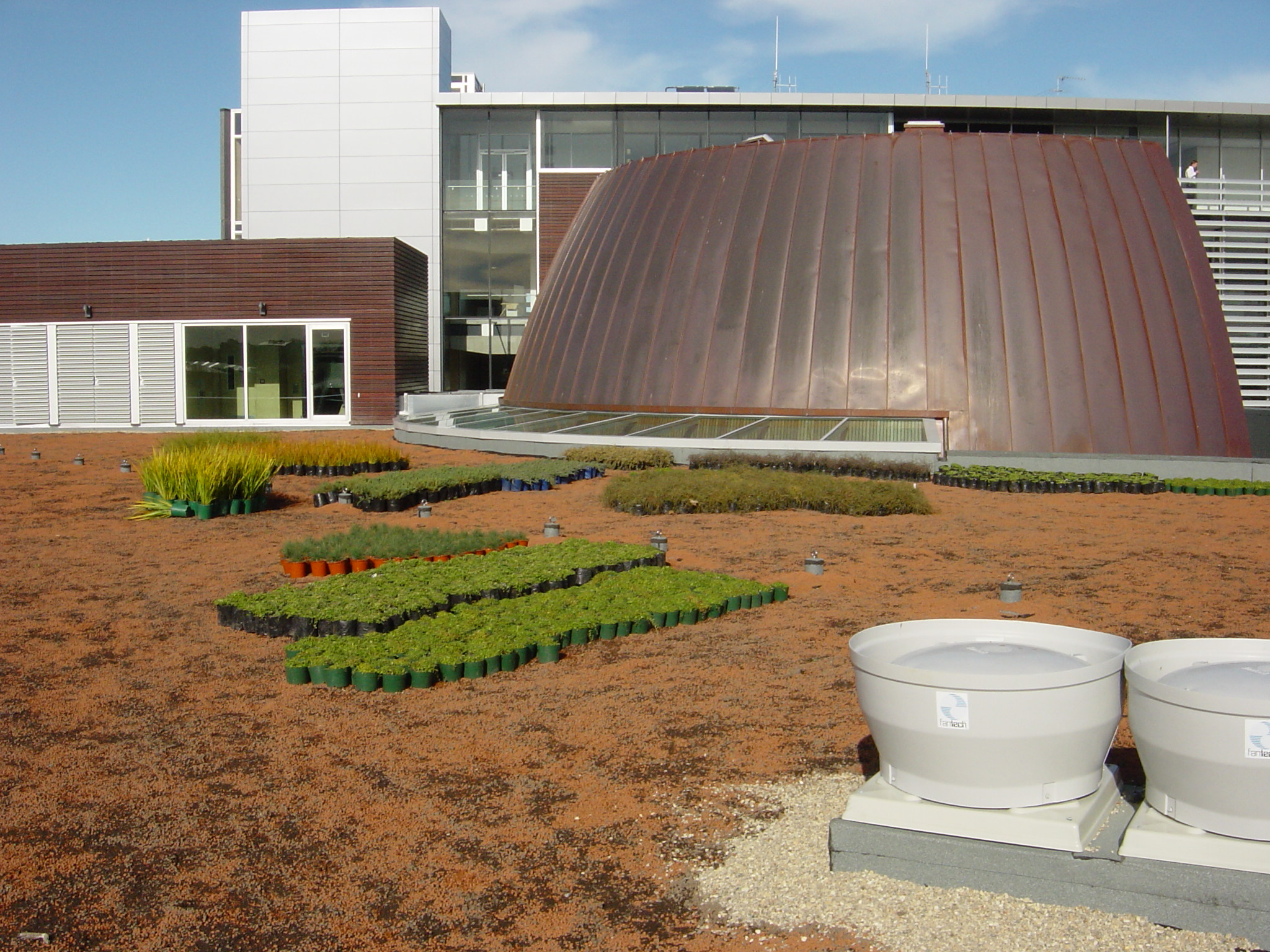 Green roof plants ready for planting