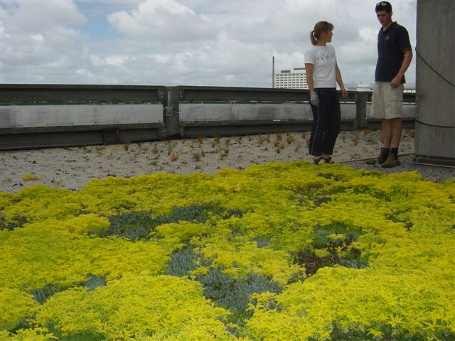 Green roof in Auckland