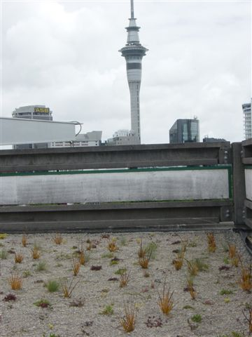 Green roof in Auckland with view of the skytower