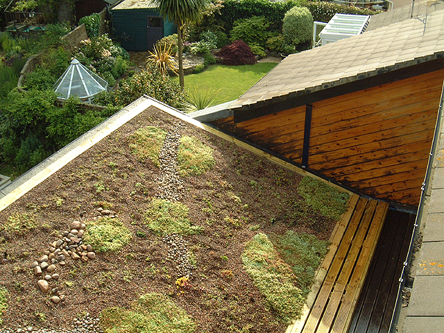 Green roof Dorset - mixed planting and pebbles