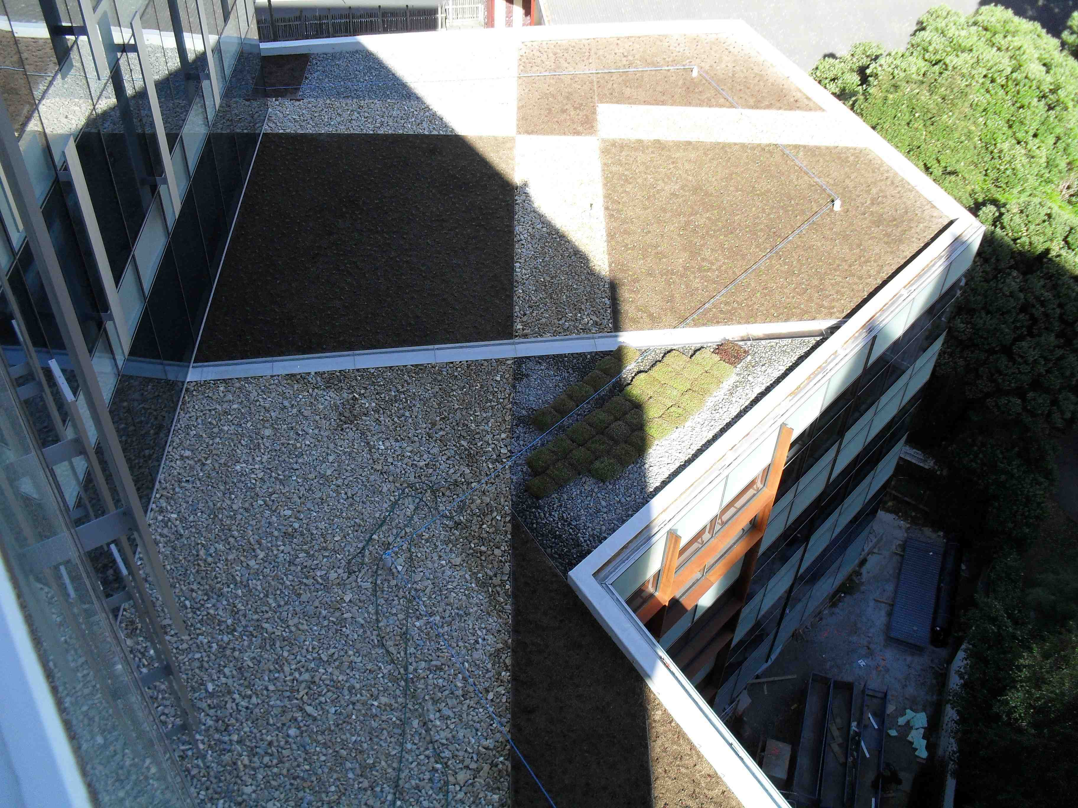 Living roof at NZI finished from level 9
