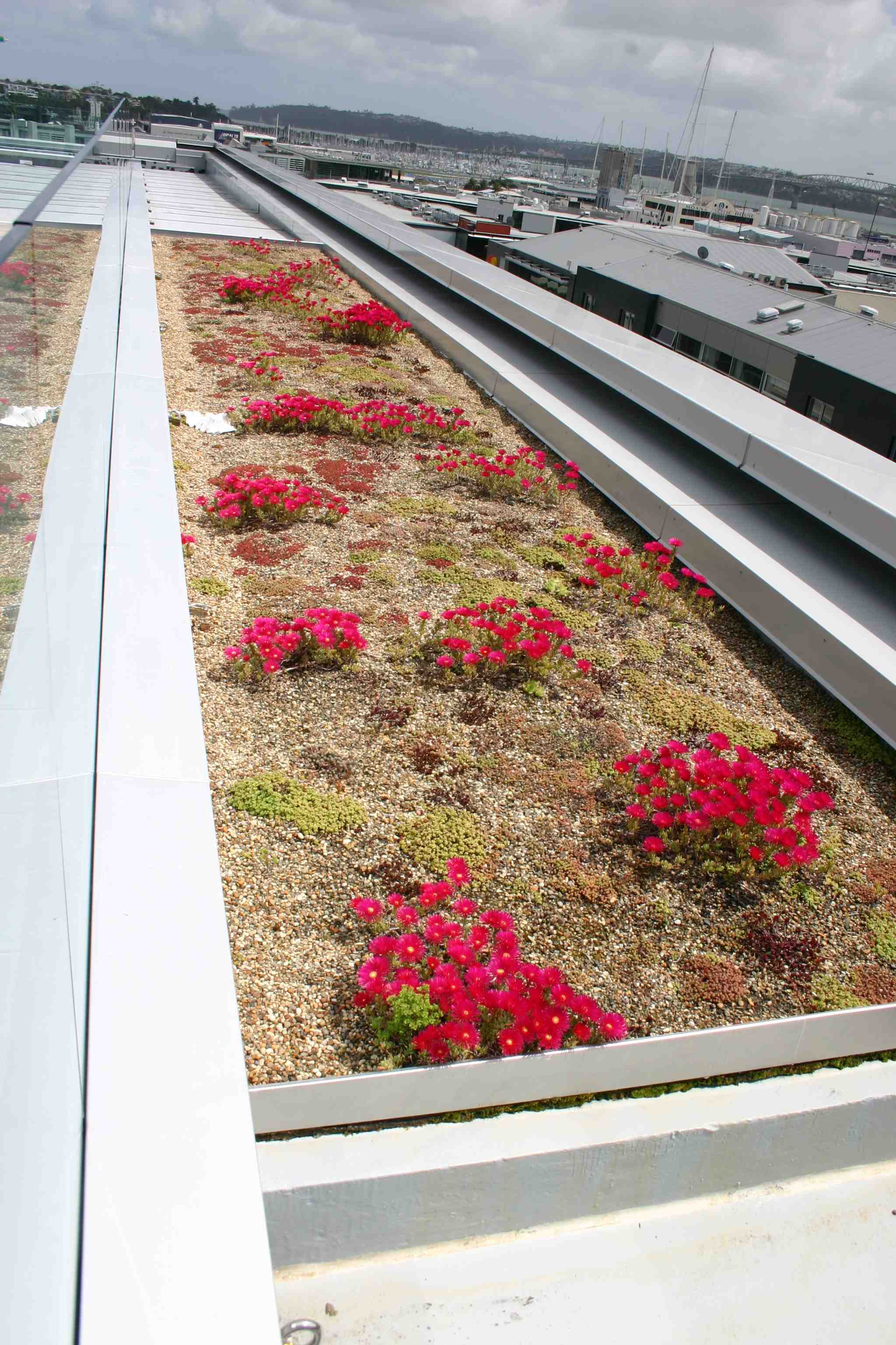 Living roof at NZI