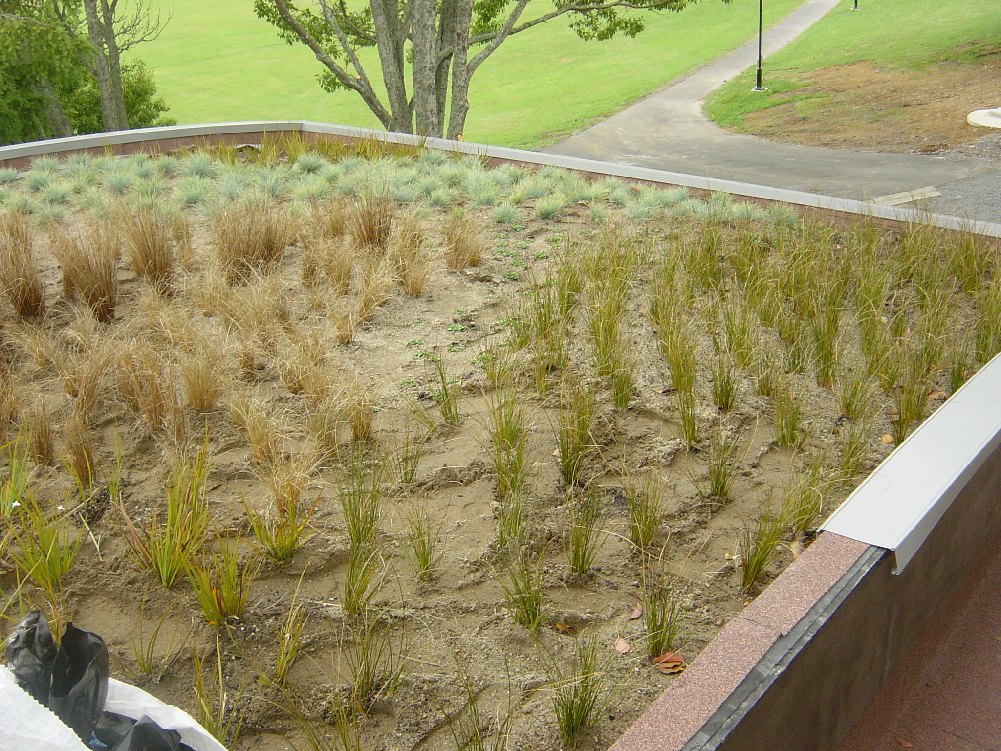 Green roof with new growth