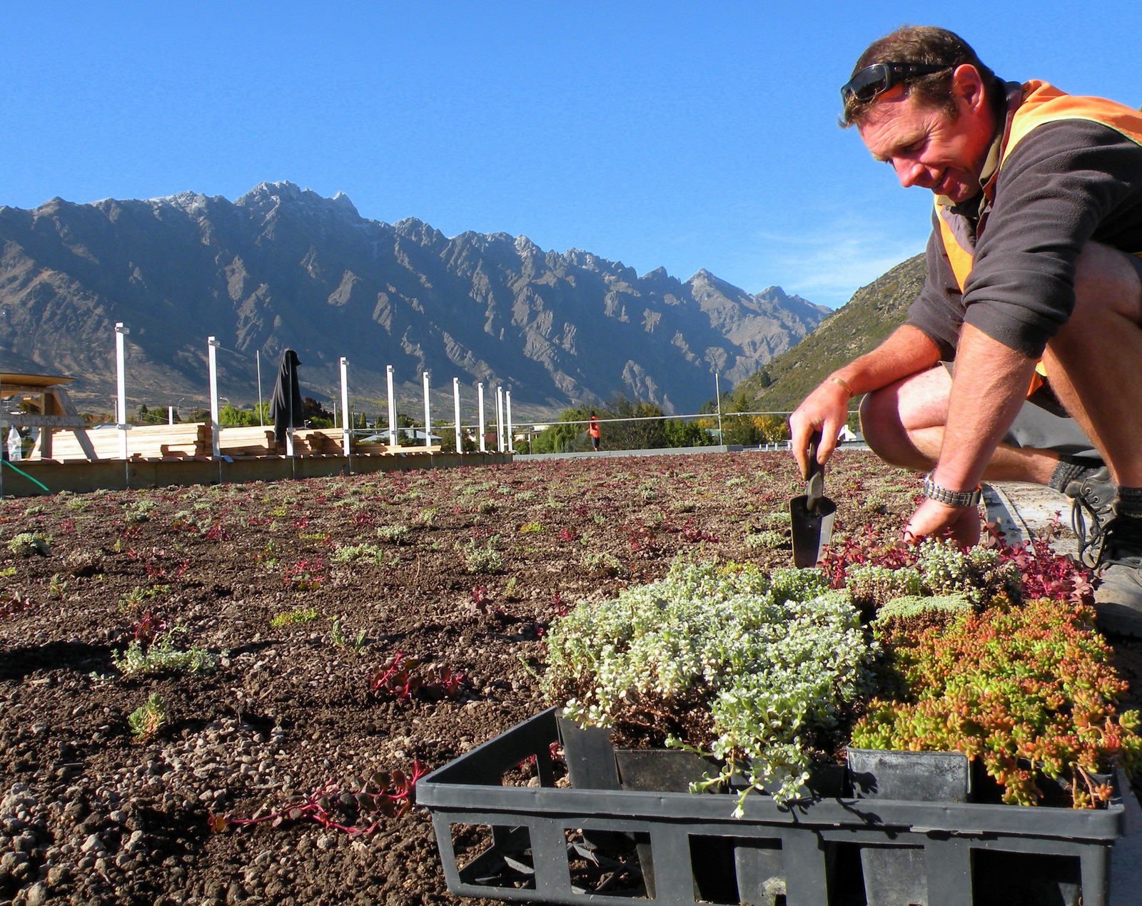 Remarkables Green Roof Planting