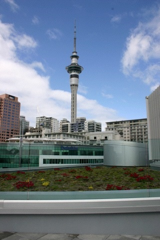 Auckland CBD green roof