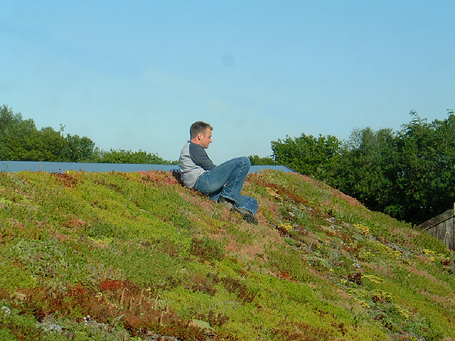 Green roof Somerset