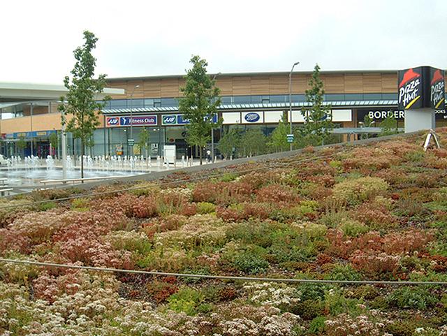 Green roof Swindon