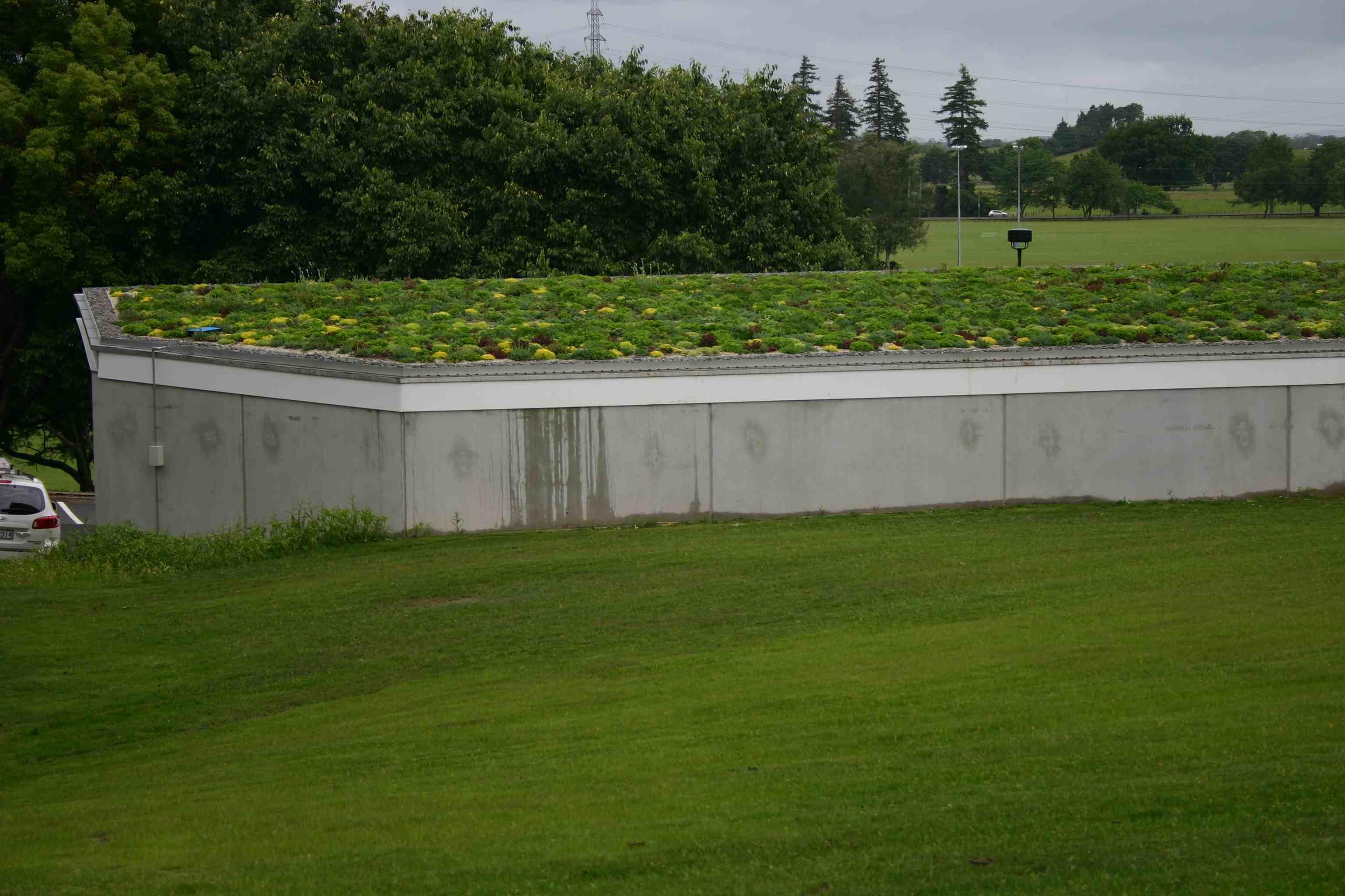 University green roof