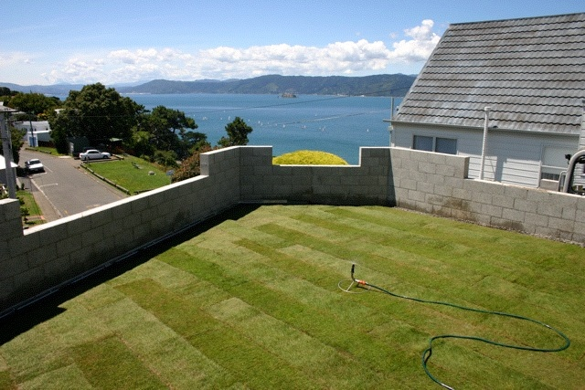 Grass roof in Wellington