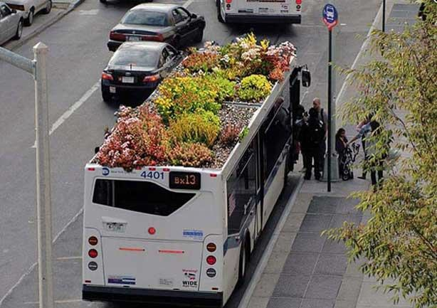 green roof on bus