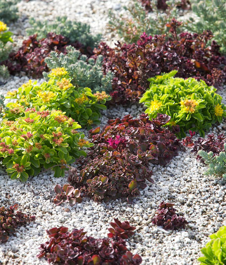 Meaning of a living roof