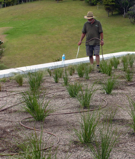 Green Roof Maintenance NZ