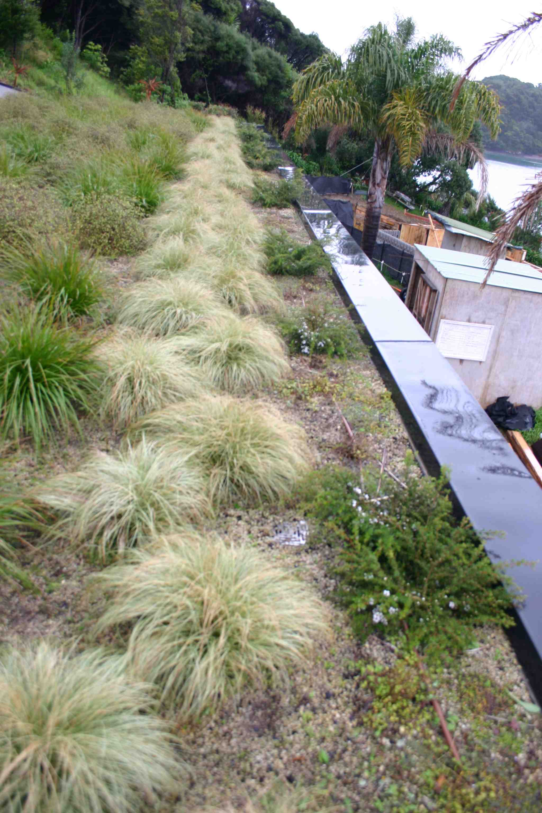 Nice growth on the living roof in the Bay of Islands