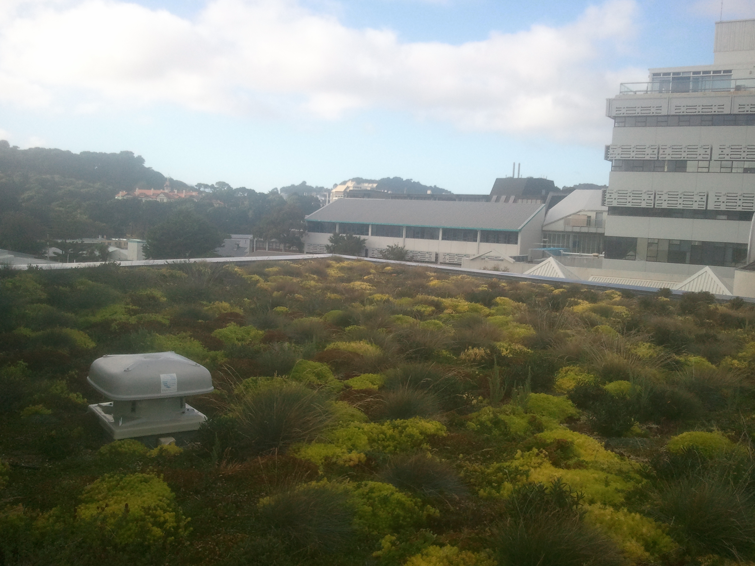 view 6 months after planting green roof