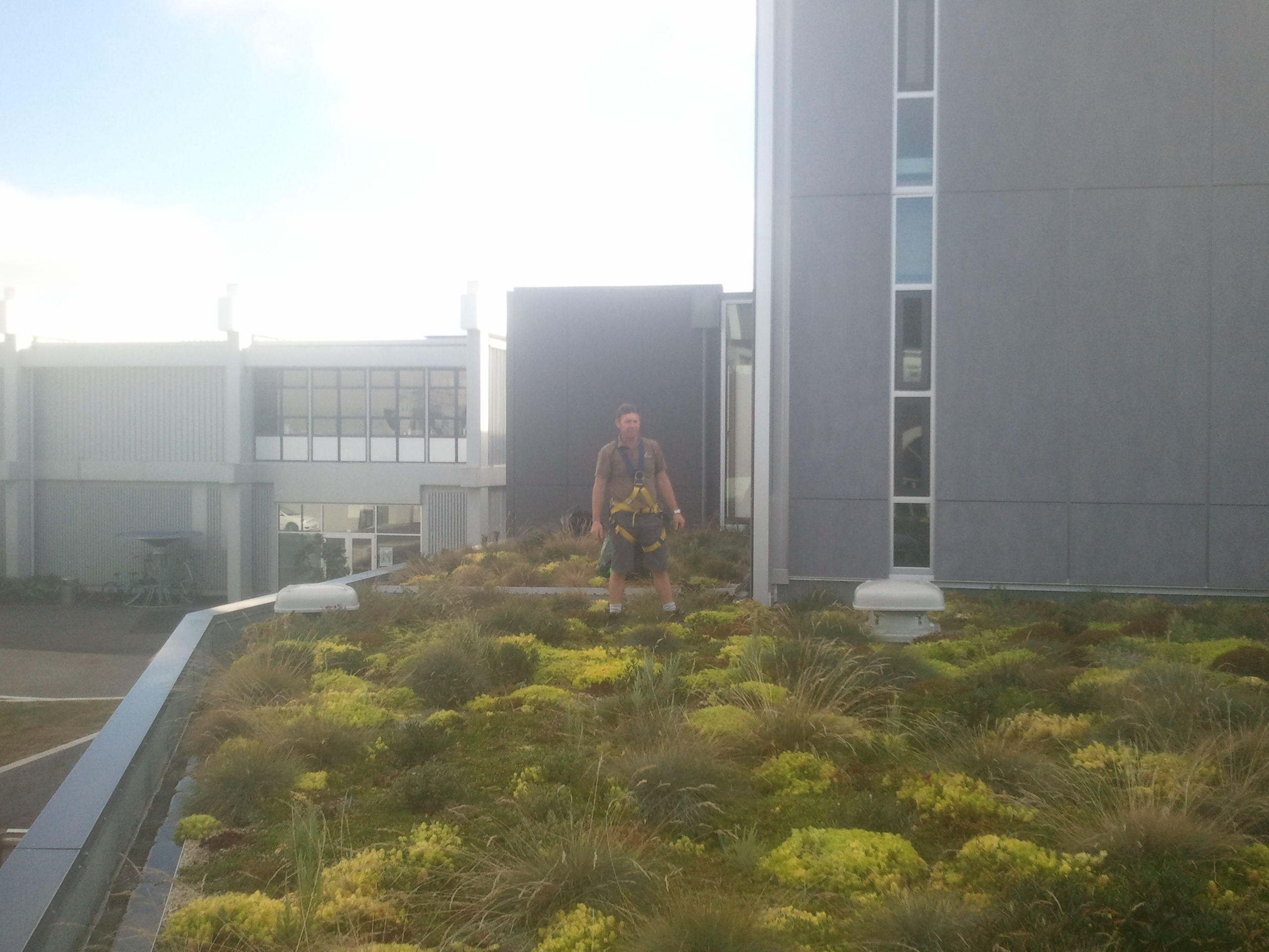 Well grown green roof in city after 6 months