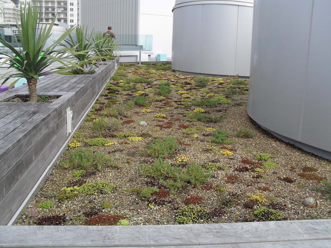 Awesome green roof on the NZI Building