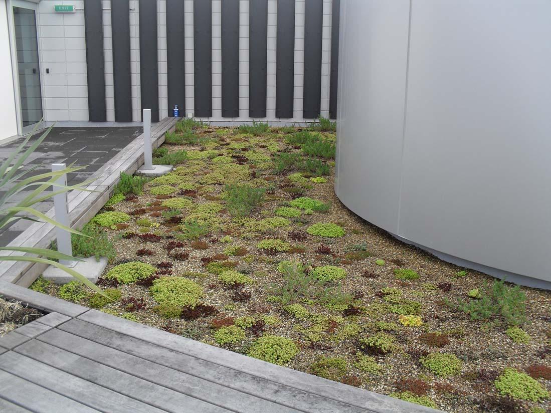 NZI Building green roof & water tank