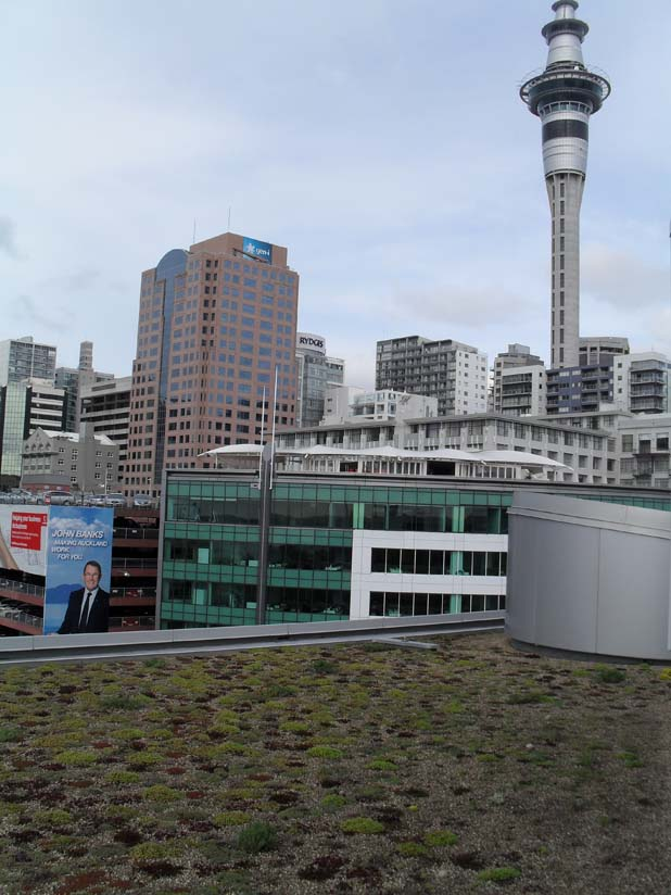 view of the sky tower from the NZI Building green roof