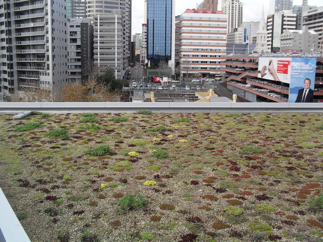 View of Auckland city from the green roof on the NZI Building