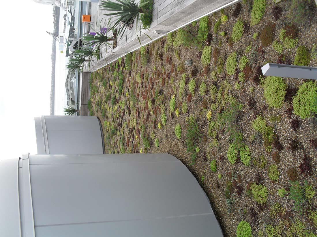 NZI Building green roof