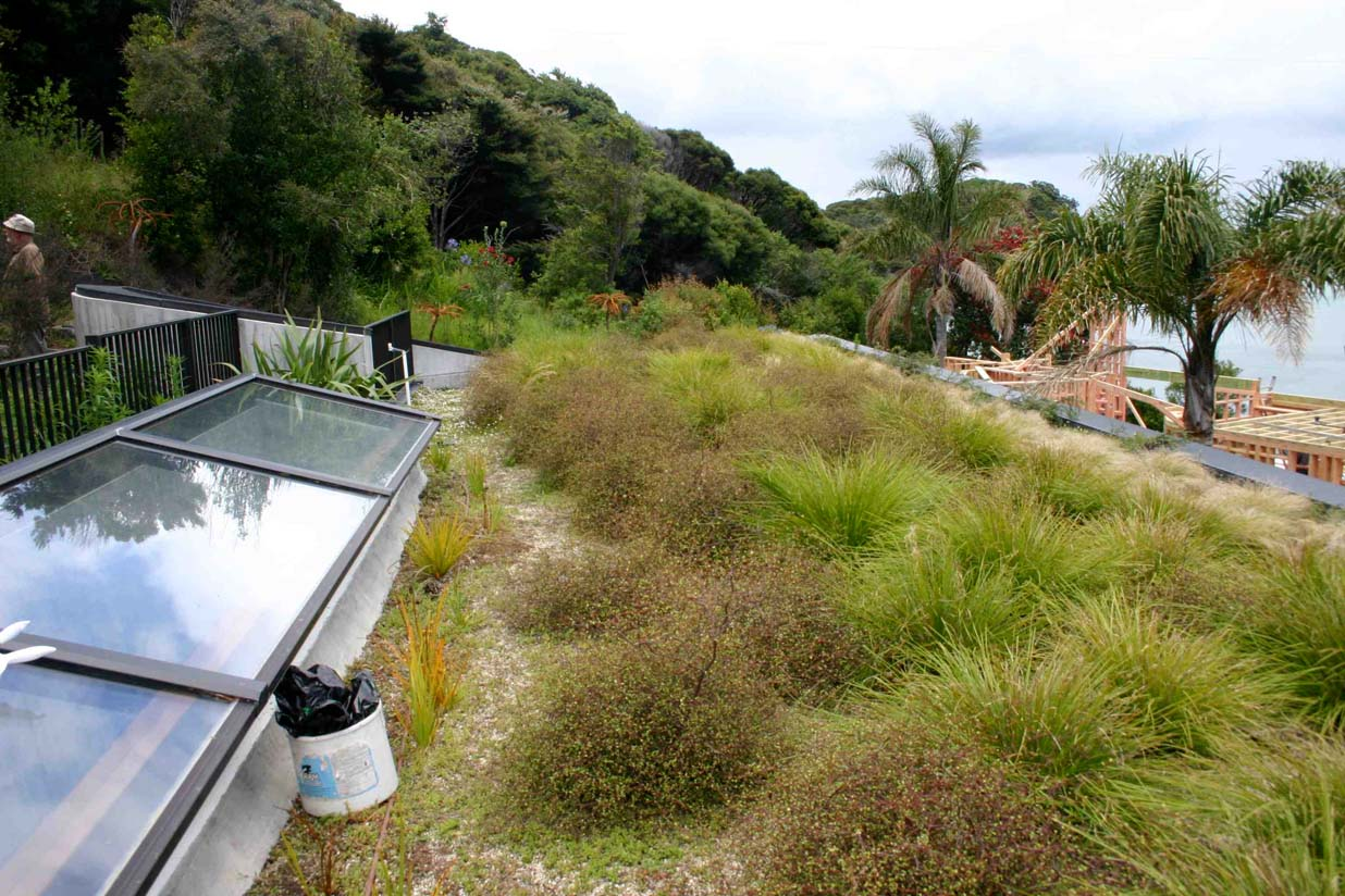 close up view of fully grown green roof