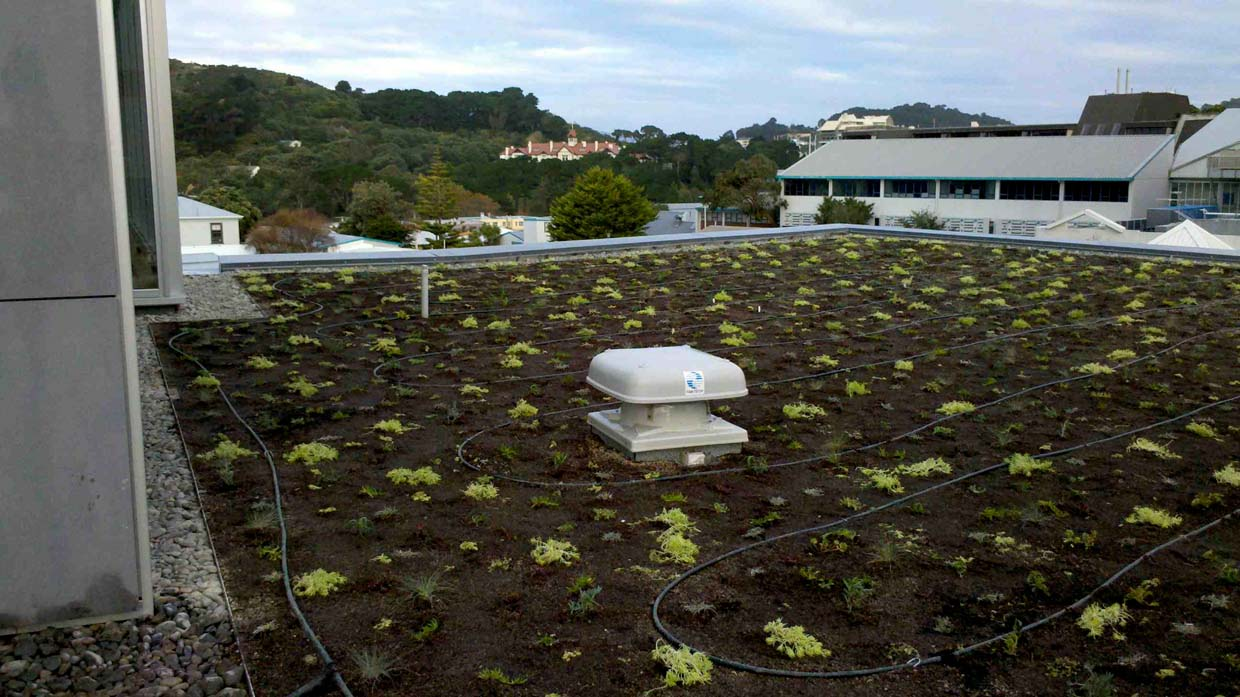 newly planted green roof at the College of Creative Arts