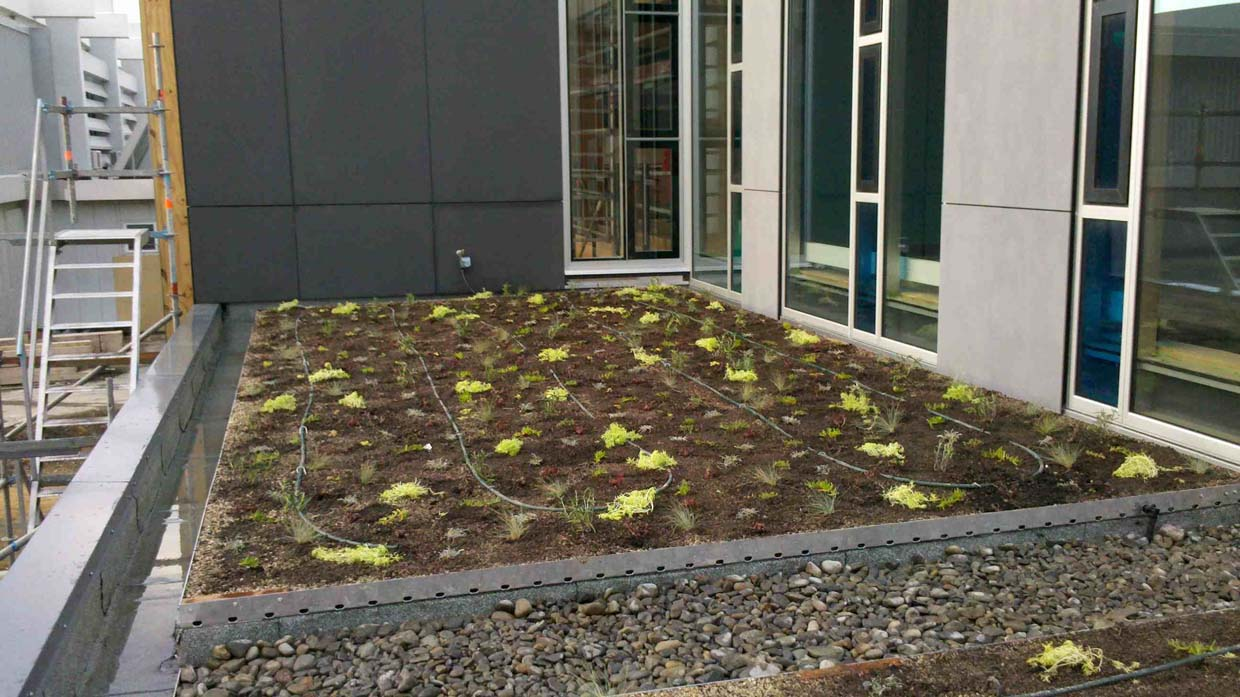 Green roof at the College of Creative Arts, Massey