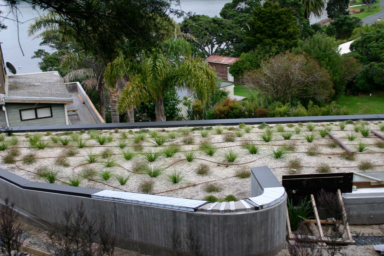 Beach sleepout Greenroof