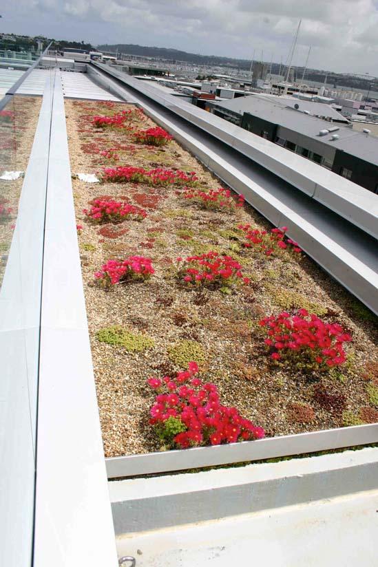 NZI Building green roof close up