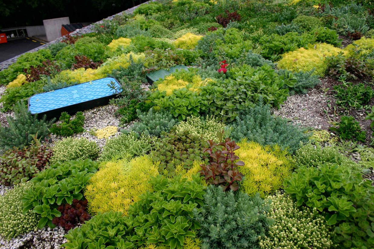 Close up of green roof at the University of Waikato