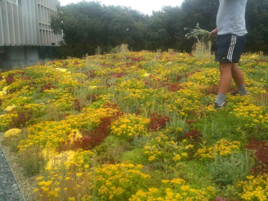 Green roof at the University of Waikato
