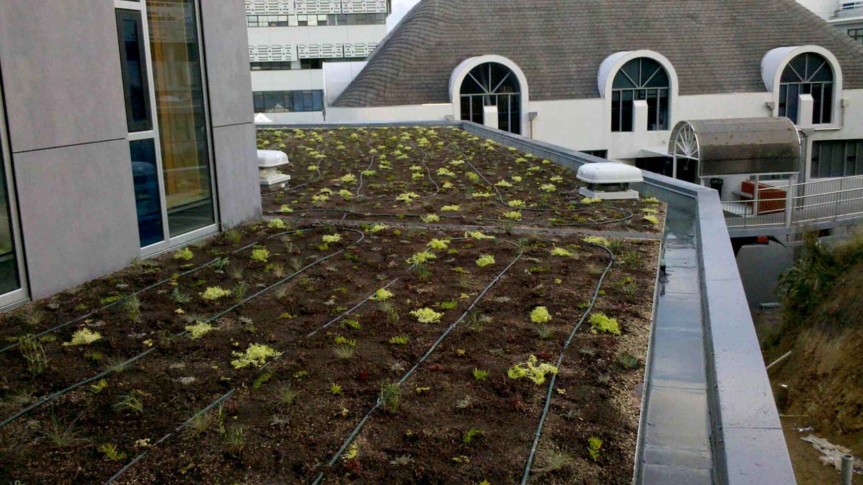 Green roof installed at College of Creative Arts, Massey University