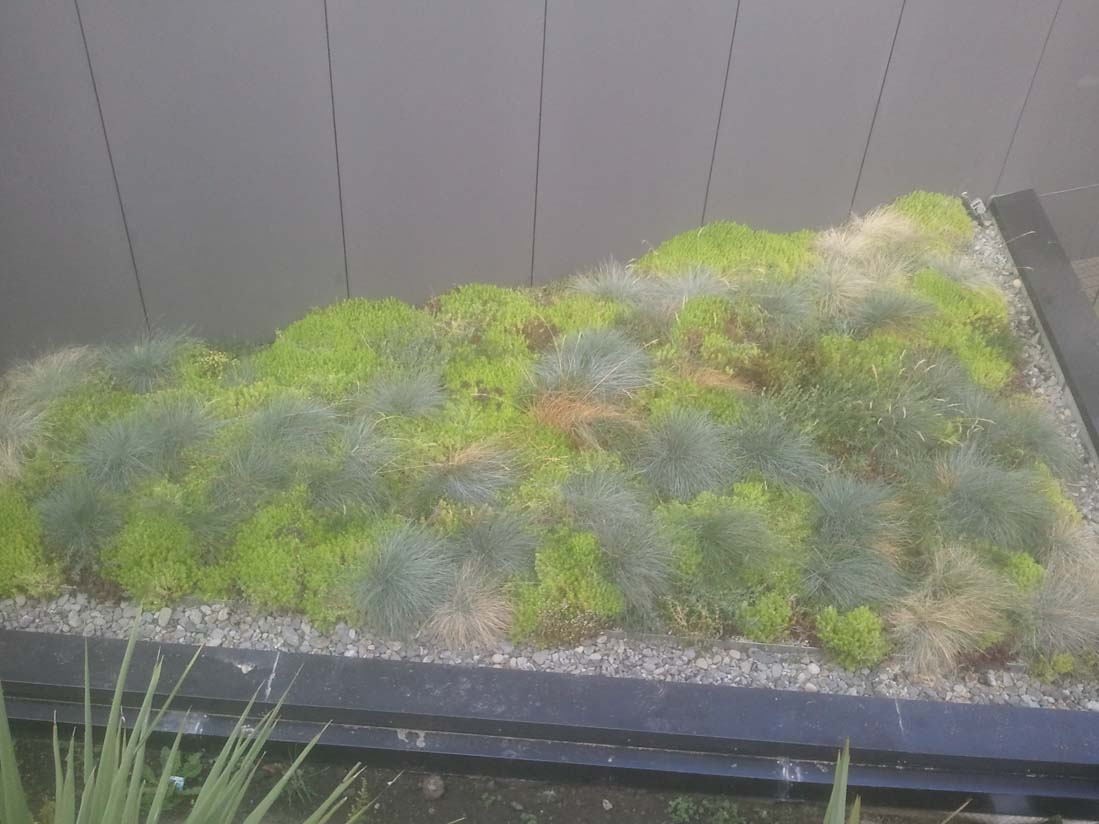 Green Roof at the College of creative arts Massey Auckland